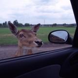 Na polskim w safari
