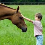 Po zajęciach hipoterapii zmniejsza się u dzieci napięcie mięśniowe, redukuje się stres.