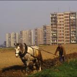 To był pierwszy rok naszego życia w mieście, wcześniej mieszkaliśmy na wsi.