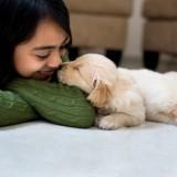 Tasiemczycą dzieci zwykle zarażają się, całując w czasie zabawy zwierzę, które jest nią zakażone.