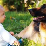 W obecności zaprzyjaźnionego psa, poziom stresu u dziecka, spada.