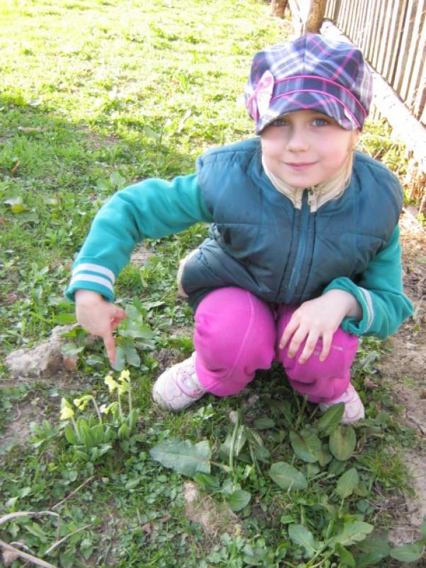 W piękny niedzielny słoneczny dzień wybraliśmy się całą rodzinką na spacer, aby dzieci mogły zobaczyć jak przyroda budzi się do życia po jakże długim w tym roku zimowym śnie. Karolinka 6lat znalazła koło domu na łące wiele wiosennych kwiatów. \nNa tym zdjęciu chciała się pochwalić znalezionym pierwiosnkiem wyniosłym:)