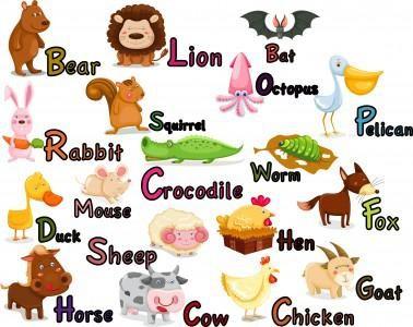 Animals- nauka jęz. ang.