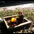 Jesiennych zabaw ciąg dalszy